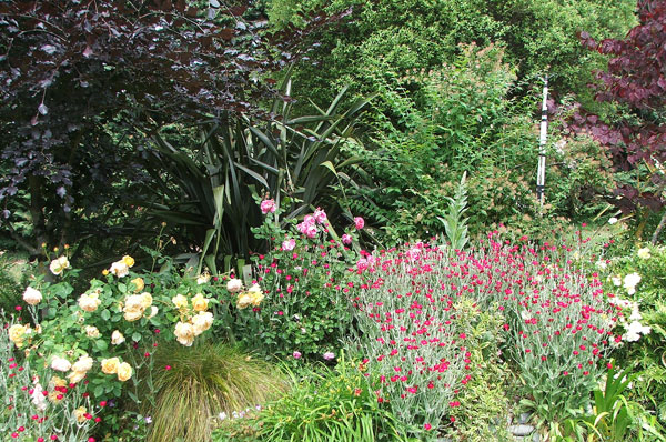 Lychnis and roses underneath the Copper Beech.