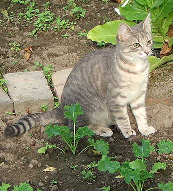 A wonderful gardening kitten.