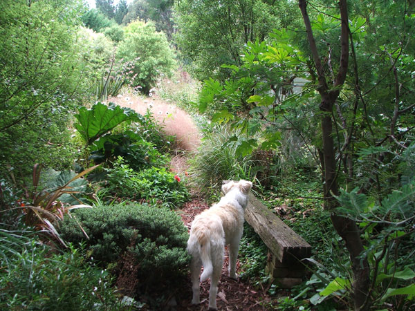 Rusty the dog plans his route - but where has the path gone?