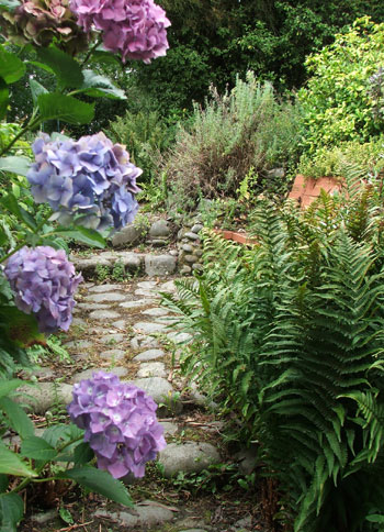 Ferns and hydrangeas - lovely!