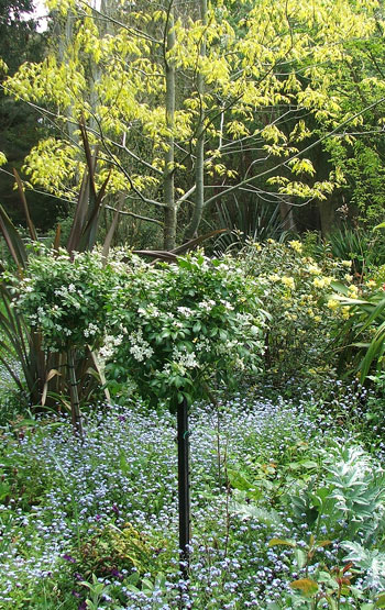 In a sea of blue forget-me-nots.