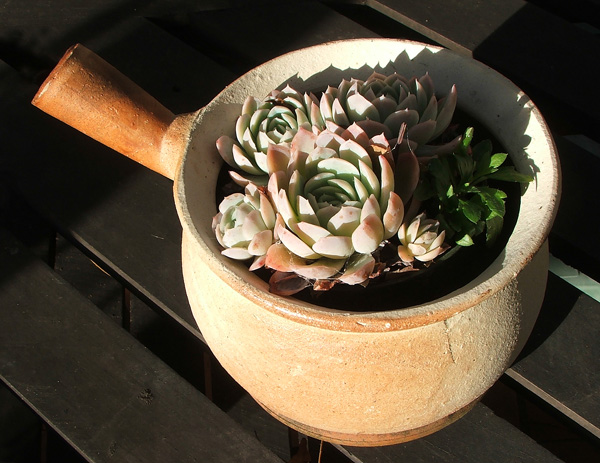 Squashed into a new pot on the patio table.