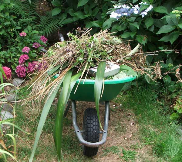 Every hour I can fill the wheelbarrow with weeds.