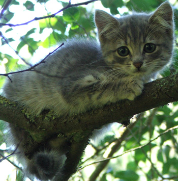 "The image ""http://www.mooseyscountrygarden.com/garden-journal-09/wild-grey-kitten.jpg"" cannot be displayed, because it contains errors."