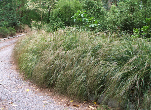 Go on grow some grasses for Short decorative grass