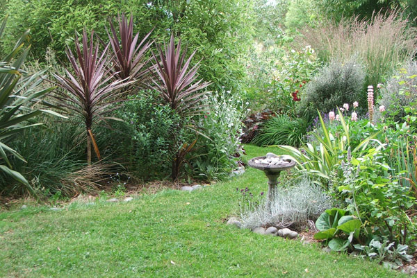 Those red cordylines are growing well!