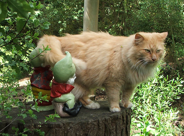 On the tree stump in the Shrubbery with his gnome friends.