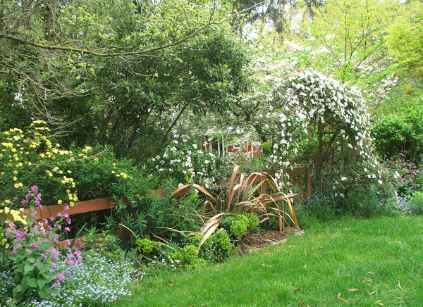 Clematis, Rose Canary Bird, and other lovely late spring things...
