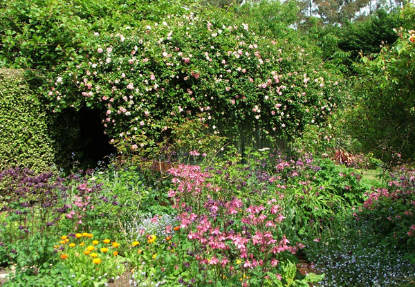 The garden on the other side of the pergola.