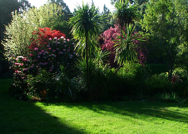 Rhododendrons, Cordylines, and a Crabapple in blossom.