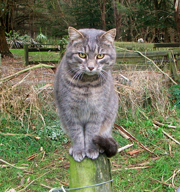 My Stables cat.