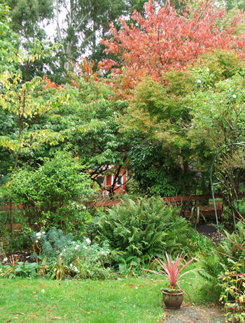 Cottage, flowering cherry, and cordyline!