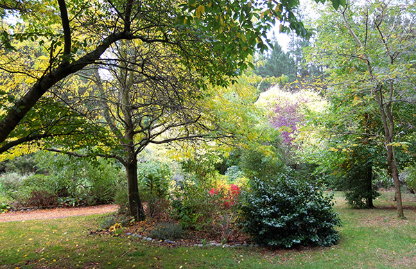 There is a lot of autumn gold in this garden.