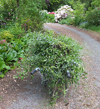Off to the compost we go.
