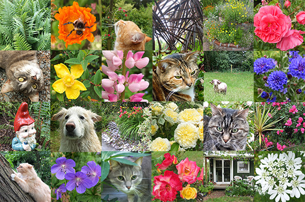 My garden, cats, dog, flowers, bees, gnomes, the ram...