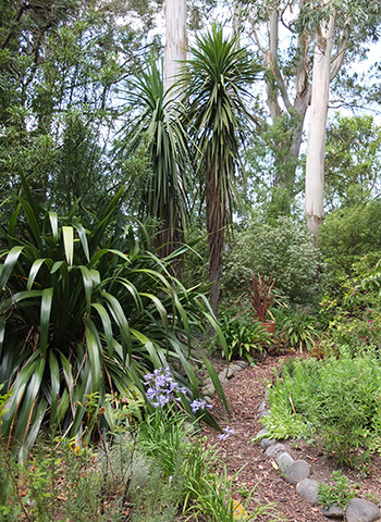 The white tree trunks are Eucalypts.