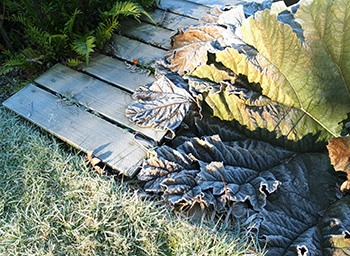 On the grass, the bridge, and the gunnera leaf.