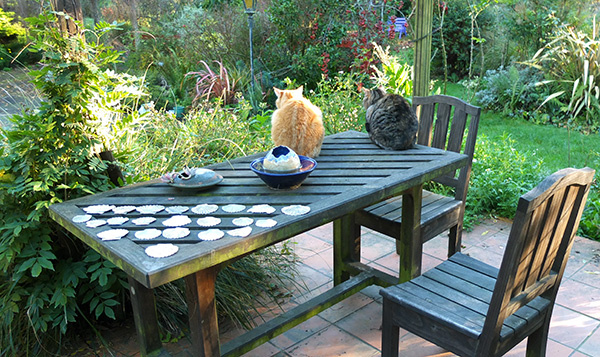 Cats Percy and Histeria on the patio table.