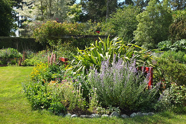 Catmint, annuals, and a beautiful shining green Phormium.