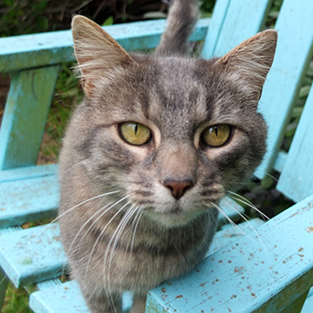 My lovely grey stables cat.