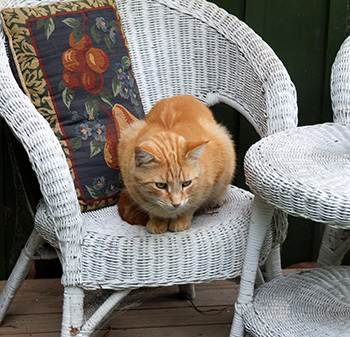 Relaxing on a white cane chair.