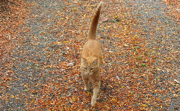 On the autumn leaves.
