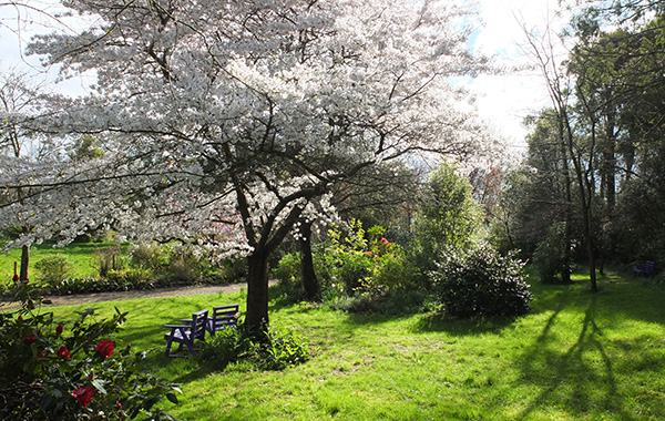 A lovely place in spring.