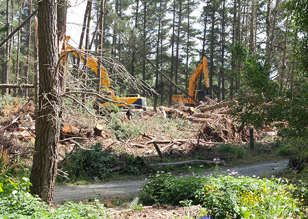 They cut and then grab the fallen trees.