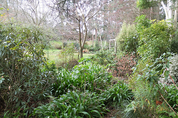 The tree men are returning soon to tidy up the remaining Wattle trees.