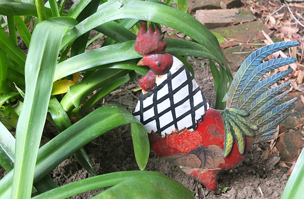Rooster in Agapanthus