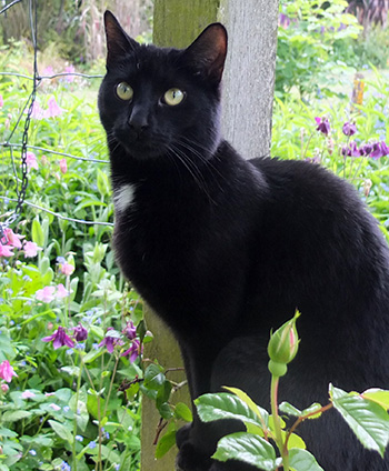 My quirky black cat.