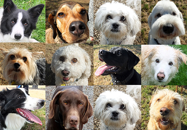 Lots of dog friends...