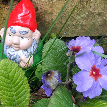 Gnome and flowers.