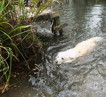 Both the dogs love swimming.