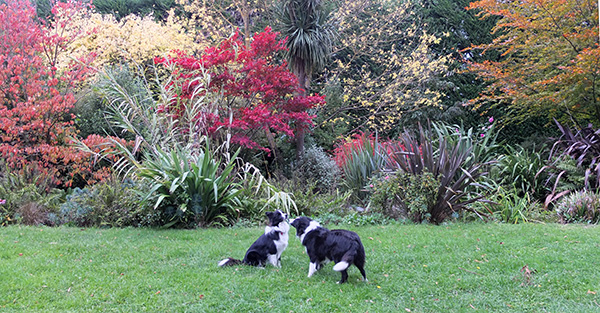 And autumn trees in the Dog-Path Garden.
