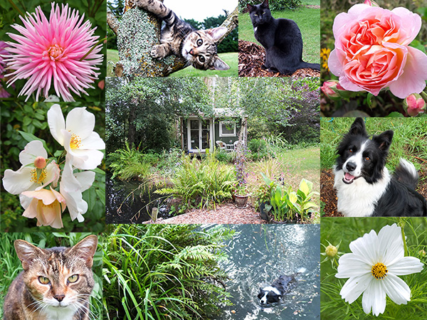 My garden and animals - some of them!