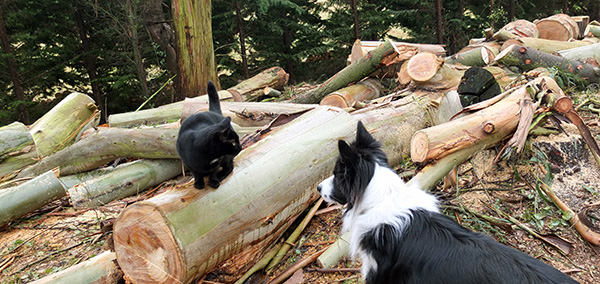 Inspecting the wood.