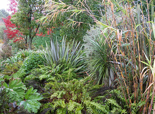 Phormiums, ferns, gunnera, and giant reeds hide the stumps!