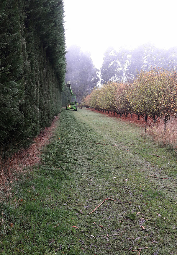 Such a neat edge for a hedge!