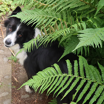In the ferns.