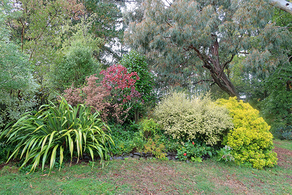 Front shrubs are a Phormium, Corokia, and an Escallonia