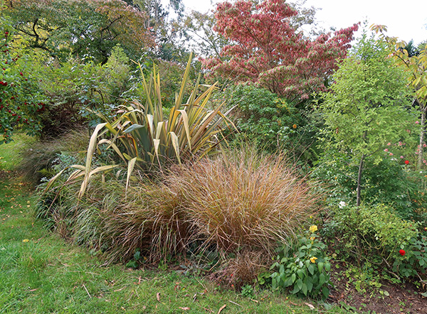 Spiky plants are a Phormium and Anemanthele grasses.