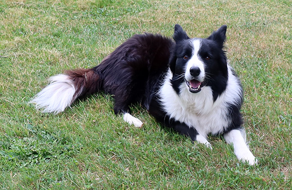 One of my lovely girl dogs.