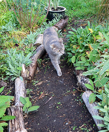 On a path in the Hump Garden.
