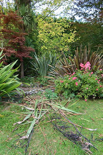 Phormium mess from the water race.