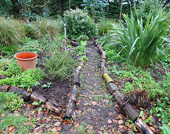 All my paths in the Hump Garden look the same!