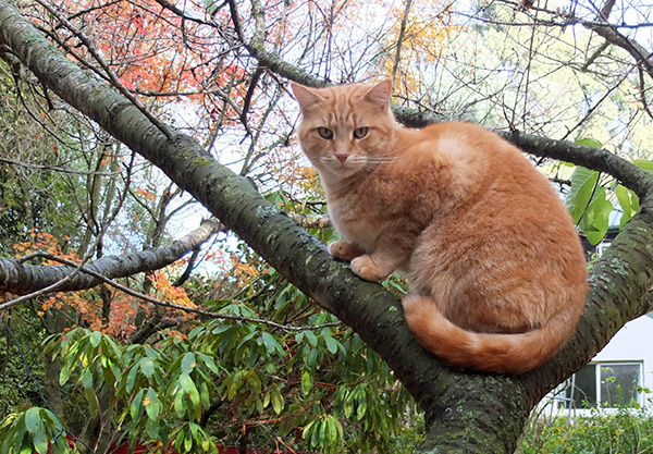 Ginger Percy in a tree.