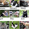 2018 Cats and Dogs Calendar