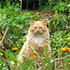 Furry Gardening Friends - Cat, Dog, Kitten