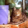 Sifter Cat in Pots